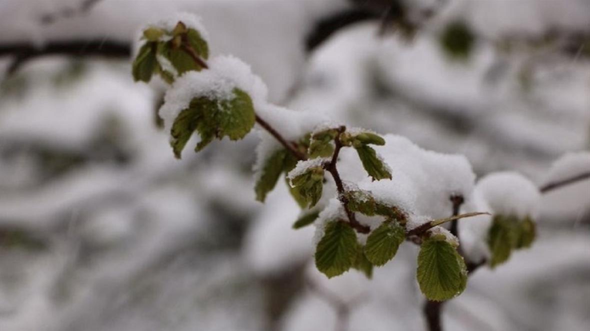 خسارت 14 میلیارد ریالی باغات اردل بر اثر سرمازدگی