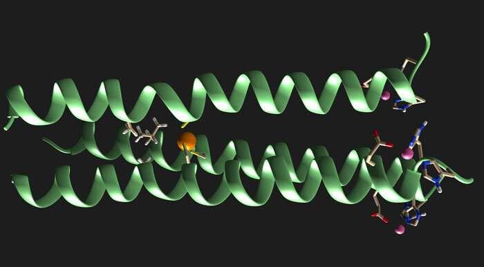 محققان به ساخت آنزیم های مصنوعی یک قدم نزدیک تر شدند