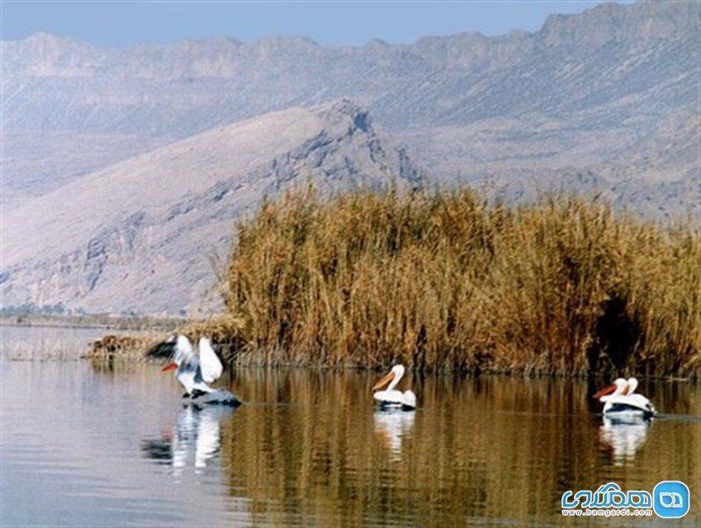 تالاب یوسفکند مهاباد؛ میزبان گرم زیباترین پرندگان