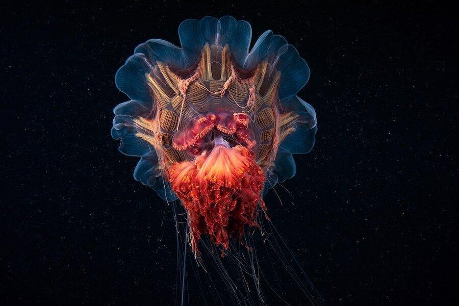 عکاسی از موجودات ناشناخته دریایی ، آیا سالپس و سیفونوفور را می شناسید؟