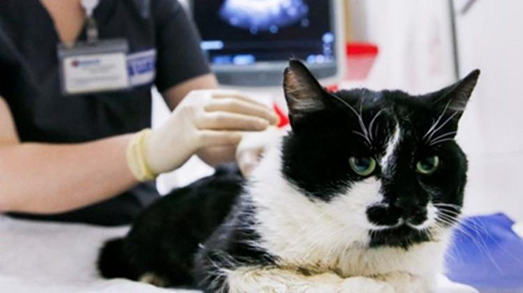 تایید رسمی ابتلای یک گربه خانگی به کرونا در انگلیس
