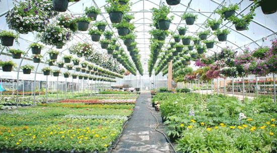 خرید تجهیزات گلخانه ای، چیزهایی که لازمتان خواهد شد!
