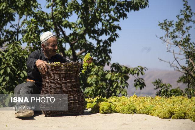 تاثیر ترویج دانش کشاورزی بر توسعه پایدار روستا