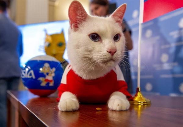 استفاده از گربه پیشگوی جام جهانی 2018 روسیه در یورو