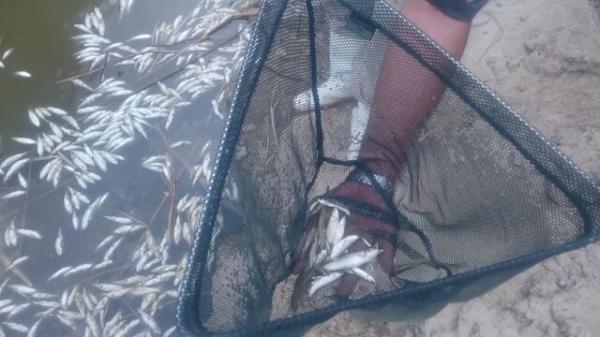 زنده گیری و رهاسازی ماهی های در حال مرگ رودخانه اترک
