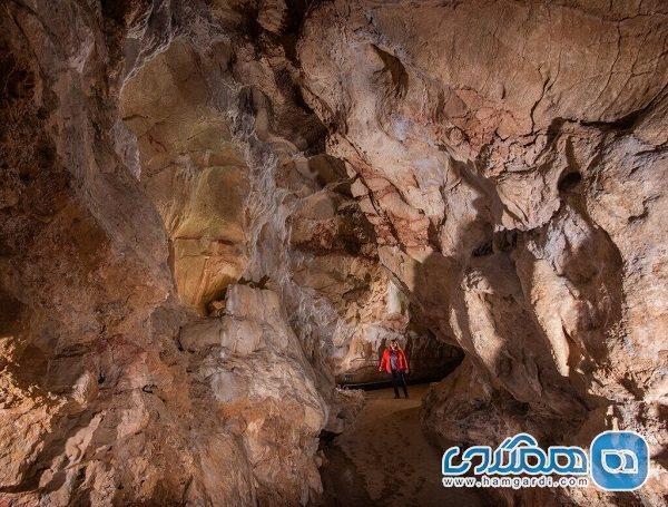 خفاش ها متهمان ردیف اول نابودی غار نگاره های تاریخی هستند