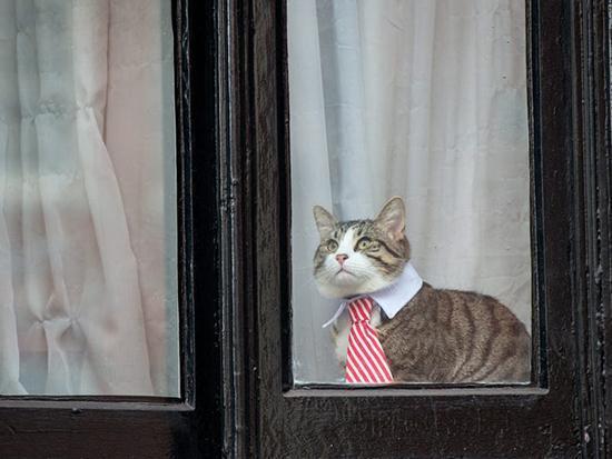 تصاویری از برترین شکار لحظه های گربه ها